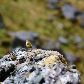 DOC - Great walks - Bird on rock