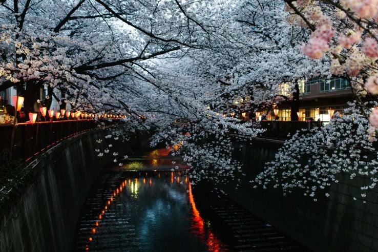 Meguro-river in Tokyo, Japan