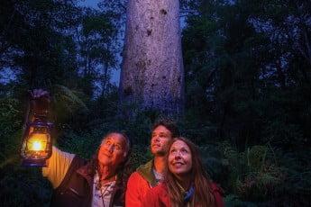 Tāne Mahuta, Waipoua Forest, New Zealand