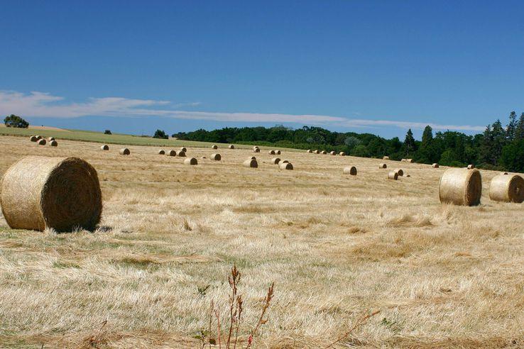 Hay bales in a paddock, Timaru, New Zealand.