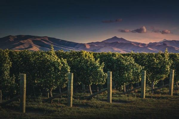 Fine Wines, Te Mata Peak, New Zealand.